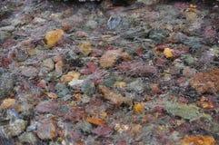 Färgrikt vaggar i floden Arkivfoton
