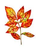Färgrikt vattenfärgblad royaltyfri illustrationer