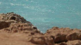 Färgstänk för kustlinjehavvåg i den steniga ön, slut upp av den idylliska ön vid solig dag lager videofilmer