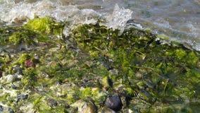 Färgstänk havsväxten Arkivfoton