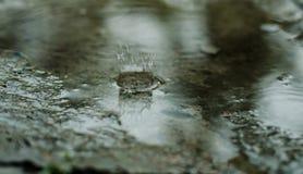 Färgstänk regn på asfalt droppar royaltyfri fotografi