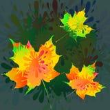 Färgstänk rosa & Butterly-vektor royaltyfri illustrationer