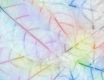 färgtjänstledigheter, blad Arkivfoton