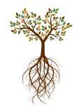 Färgträdet och rotar också vektor för coreldrawillustration vektor illustrationer