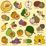 Färguppsättning med tropiska frukter, vektortecknad filmklistermärkear Arkivbilder
