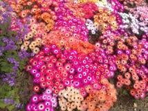 Färgvariation Royaltyfria Foton