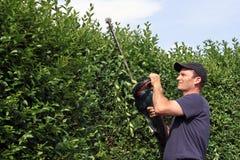 Fästa ihop en häck som arbeta i trädgården Royaltyfri Fotografi