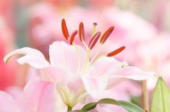 fästande ihop blomma isolerad liljabanawhite Royaltyfri Foto