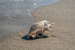 fästande ihop isolerad white för banahavsskal Arkivfoton