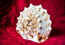 fästande ihop isolerad white för banahavsskal Royaltyfria Foton