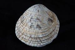 fästande ihop isolerad white för banahavsskal arkivbild