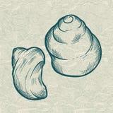 fästande ihop isolerad white för banahavsskal Original- hand dragen illustration Arkivbilder