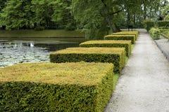 Fäste ihop block av Taxusbaccataen Fotografering för Bildbyråer