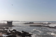 Fästning med seagulls som flyger på grov kust Fotografering för Bildbyråer