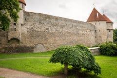 Fästningvägg och torn av den gamla staden, Tallinn, Estland Fotografering för Bildbyråer