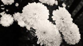 Få blommor Royaltyfri Bild