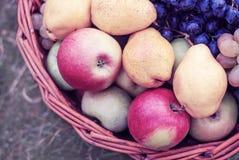 Få röda nya mogna äpplen på en bakgrund av grönt torrt gräs, frukt på lantligt gräs, användbar naturlig mat på wood plankor Arkivfoto