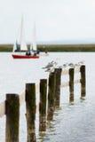 Seagulls med sailingboat Fotografering för Bildbyråer