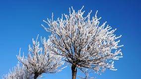 Få träd i snön mot den blåa himlen fotografering för bildbyråer