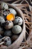 Fågelägg med ett av dem brottet och beskådar äggulan Arkivfoto