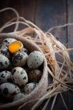 Fågelägg med ett av dem brottet och beskådar äggulan Arkivbilder