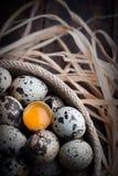 Fågelägg med ett av dem brottet och beskådar äggulan Royaltyfria Foton