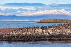 Fågelö nära Ushuaia royaltyfri bild