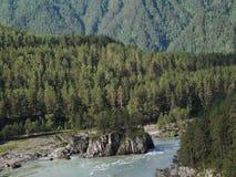 Fågel-öga sikt av den snabba floden i skogen lager videofilmer