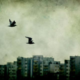 Fågel över staden Arkivbilder