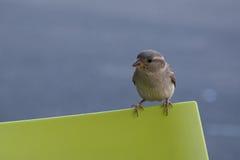 Fågel över stol royaltyfri foto