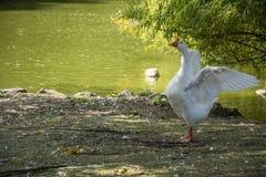 Fågel 158 Royaltyfria Bilder