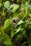 fågel 115 Arkivbild