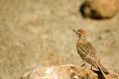 fågel 16 Arkivfoto