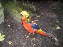fågel Arkivfoton