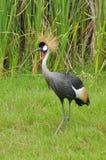 fågel Arkivfoto