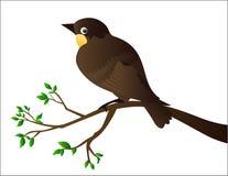 fågel Arkivbilder
