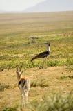 fågel 28 Fotografering för Bildbyråer