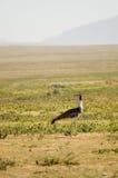 fågel 29 Arkivbilder