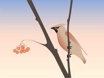 fågel Royaltyfri Illustrationer