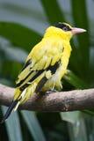 fågel Fotografering för Bildbyråer