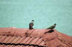 fågel 71 Arkivfoto