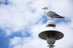 Fågel 85 Fotografering för Bildbyråer