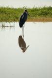 fågel 9 Arkivfoto