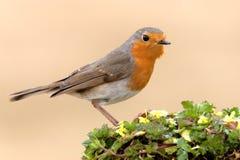 fågel royaltyfri foto
