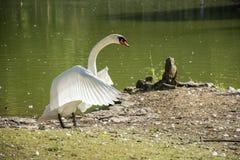 Fågel 137 Arkivfoto