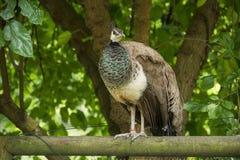 Fågel 148 Arkivbilder
