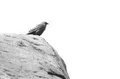Fågel 18 Arkivfoto