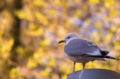 Fågel 20 Royaltyfri Bild
