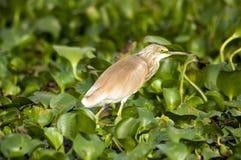 fågel 99 Royaltyfri Bild