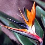 Fågel av Paradise i Fauxolja och kanfas stock illustrationer